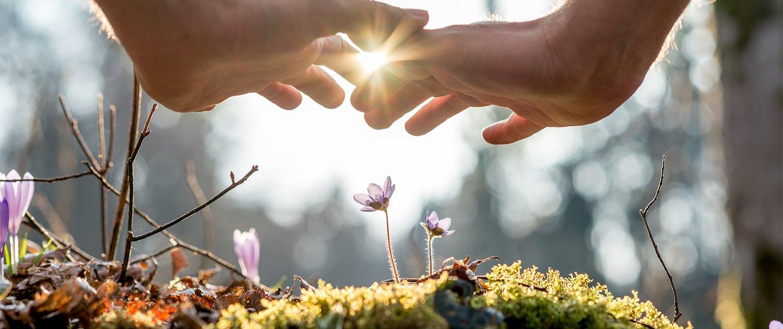 zwei Hände werden schützend über kleine Blumen gehalten, die aus dem Moosboden wachsen.